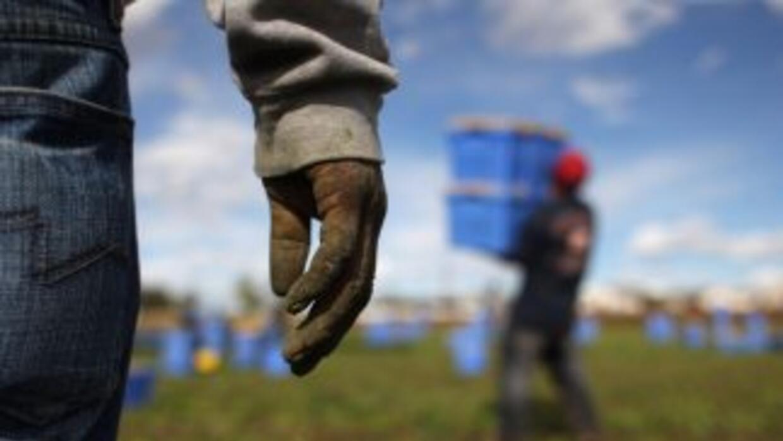 Trabajadores inmigrantes agrícolas en un campo de California.