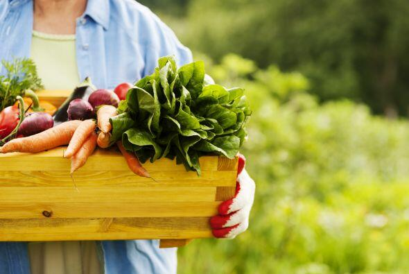 Causas comunes de la deficiencia   1. Sigues una estricta dieta vegana....