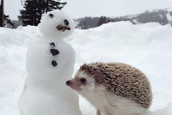 Sus habilidades no tienen límite, ¡hasta muñecos de nieve puede hacer!