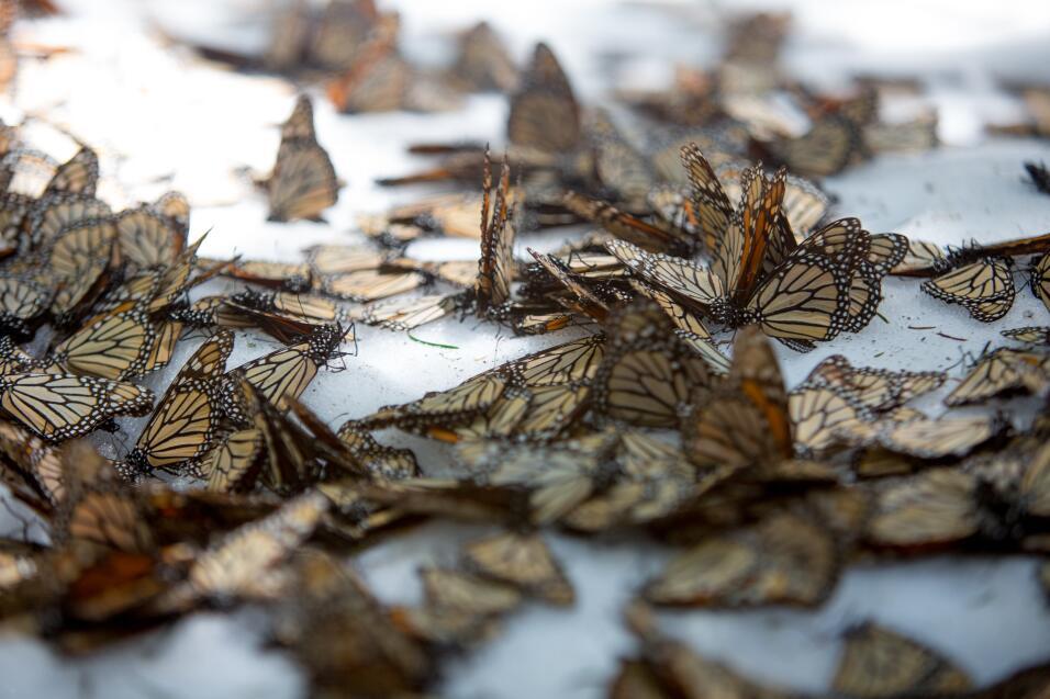 ¿Por qué ha desaparecido la famosa abeja de todas las cajas de Cheerios...