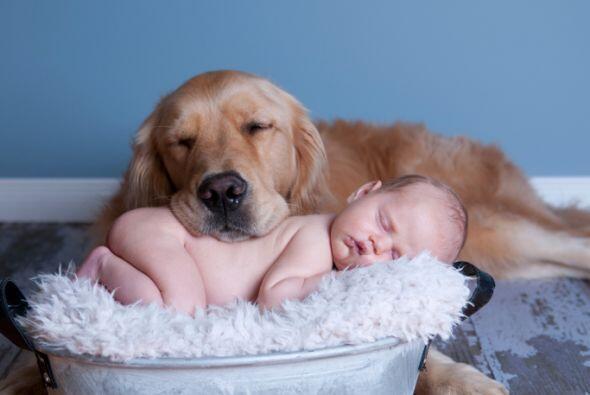 Las fotos mas adorables de bebes y perritos