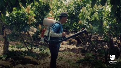 El peruano que formuló un fertilizante orgánico para luchar contra el ca...