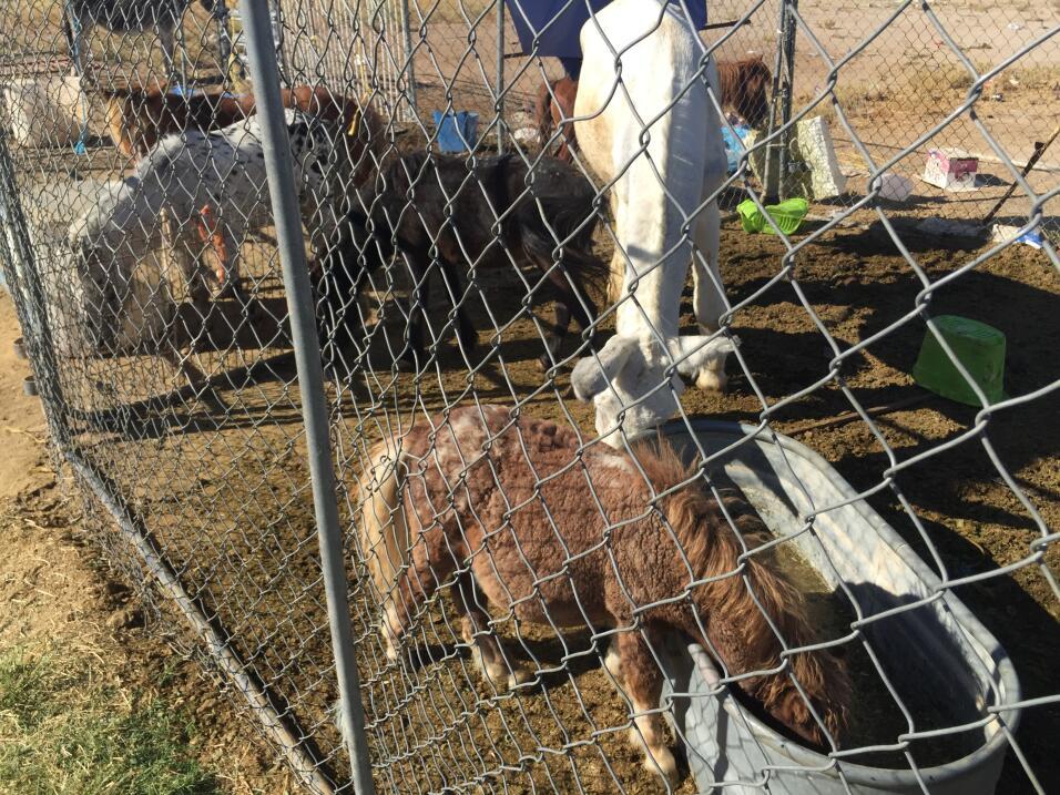Video: Así golpean y maltratan a las vacas en una de las mayores granjas...