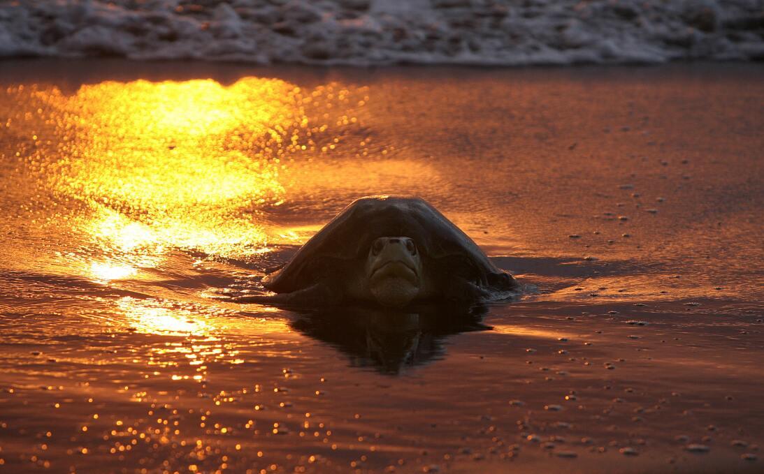 Cinco superpoderes de las tortugas que ni sospechabas GettyImages-785143...