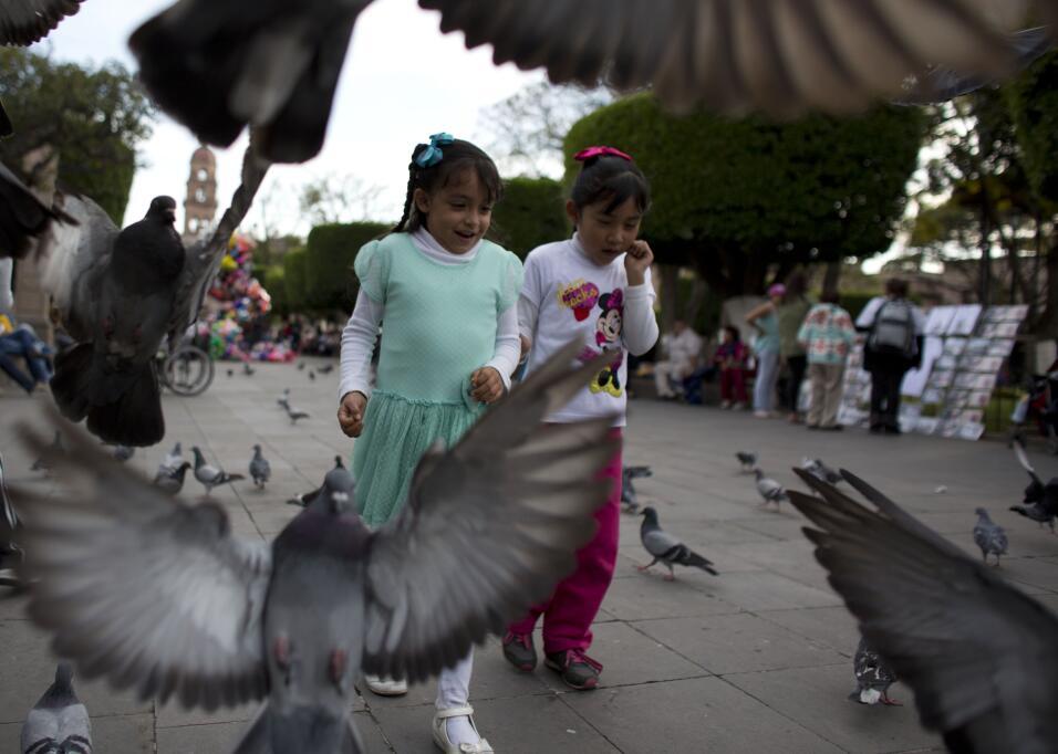 Las palomas pueden ser fascinantes, si sabes cómo observarlas.