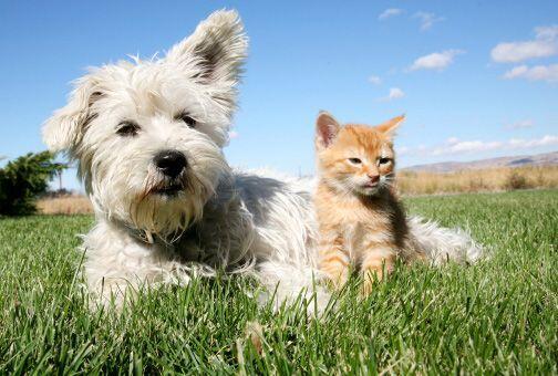 También los niños pequeños que son dueños de un gato y un perro son más...