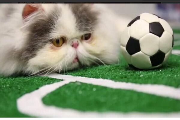 La pasión del futbol también le llega a las mascotas.