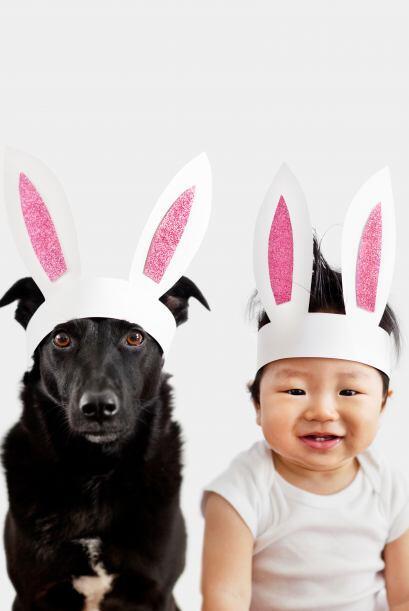 Grace Chon tiene 34 años y esa una amante de los perros.