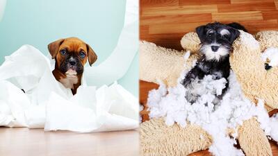 Técnicas para educar a tu perro y que no se convierta en el dueño de tu casa