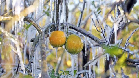 El fotógrafo Red Huber publicó una foto de unos sembradíos de naranjas c...