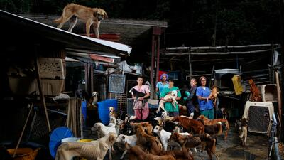 Venezuelans struggle to feed their dogs