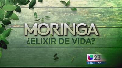 Moringa: ¿Elixir de vida? - Parte 1