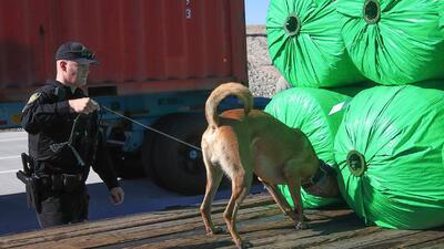 Combaten el tráfico de personas en Arizona con perros entrenados para detectar seres humanos