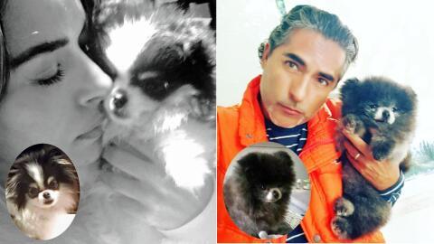 Galilea Montijo y Raúl Araiza mascotas