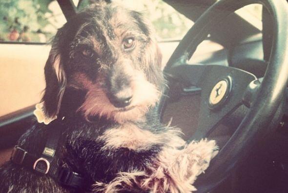 A este perrito le gusta manejar el auto de su dueño.
