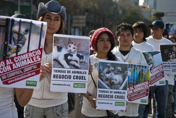 Unas 100 personas marcharon con pancartas y mensajes que decían 'No al c...