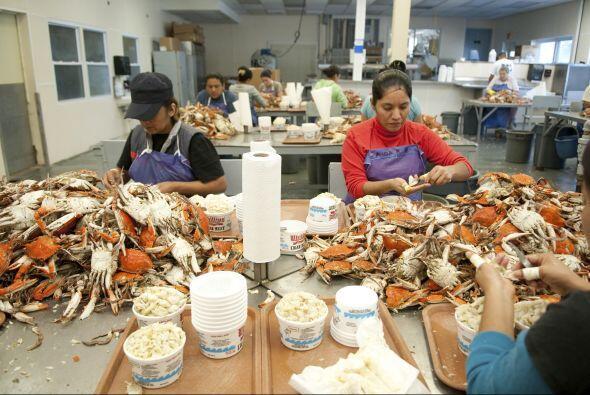 Según el estudio revelado, los trabajadores latinos tienen una presencia...