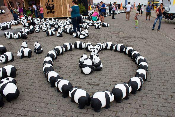 Son 1600 figuras de pandas, la misma cantidad que se calcula quedan de e...