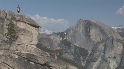 Investigan la muerte de dos turistas que cayeron desde un mirador en el Parque Nacional Yosemite