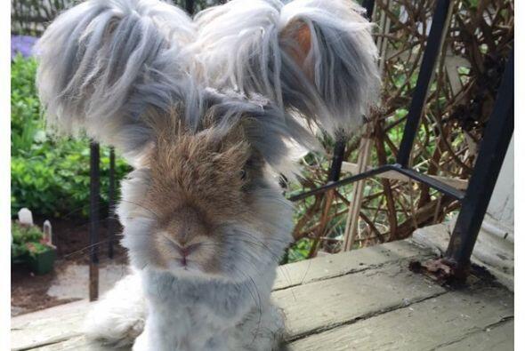 """""""Awww, esto me alegró el día. Amo ver lo que el precioso conejo hará cad..."""