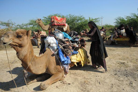 Montando al camello.