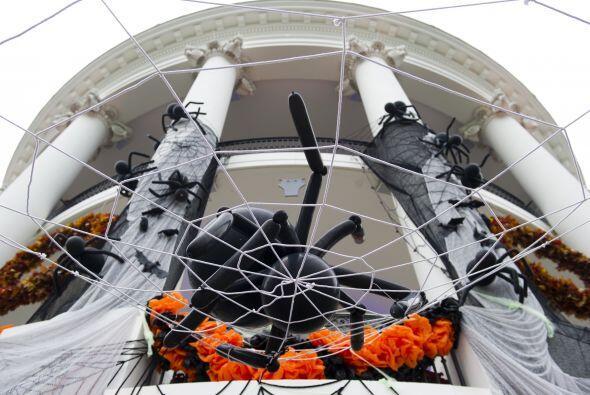 Arañas junto con sus telarañas invadieron los muros de la casa presidenc...
