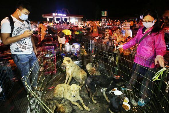 Los comerciantes sin tacto en el corazón roban a los perros que viven co...