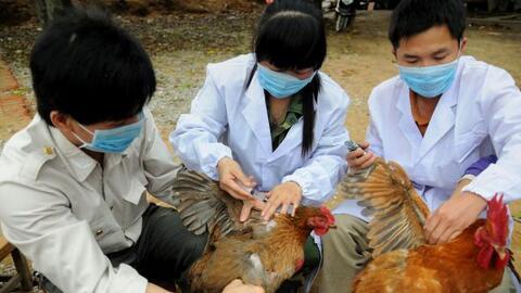 Desde 2013, al menos 600 personas han fallecido en China y 1,500 enferma...