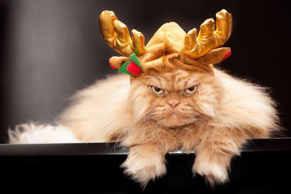 Al reno-gato le queda bastante bien ese look.