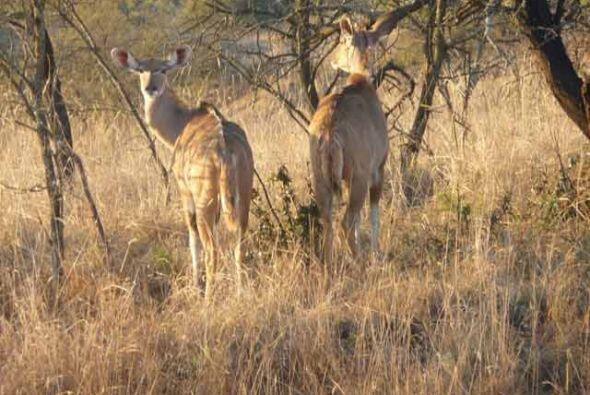 Amelia convivió con leones, vio búfalos y se adentr&oacute...
