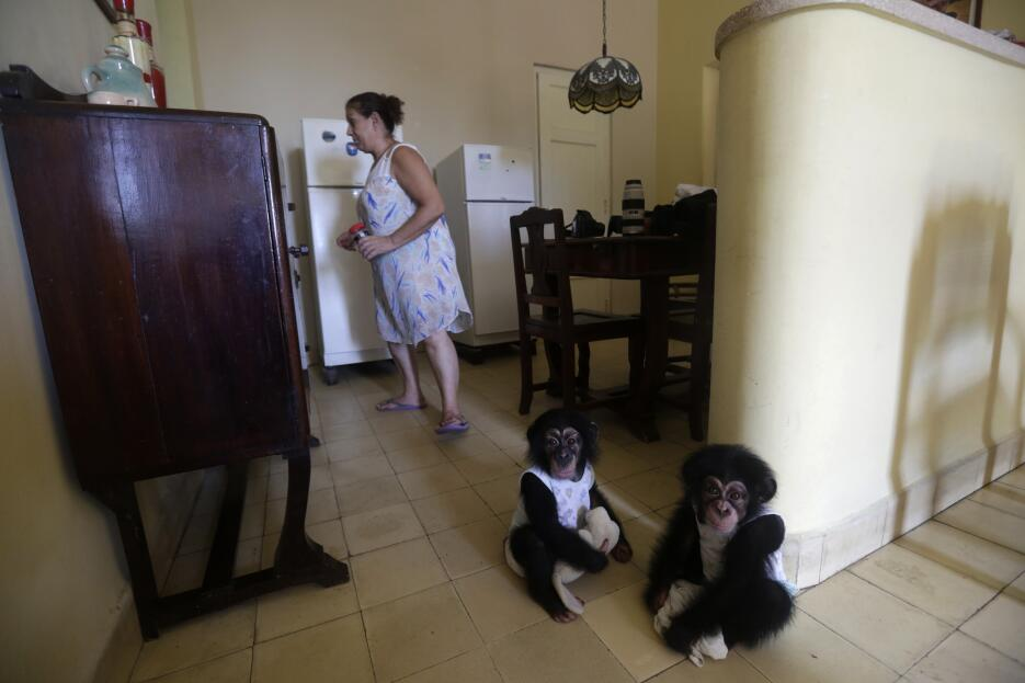 Monkey business in Havana 5.jpg