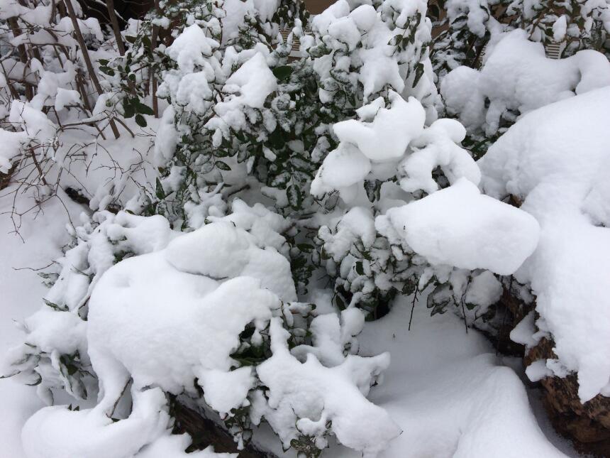 En fotos: La ciudad de Flagstaff amaneció cubierta de nieve IMG_3797.JPG