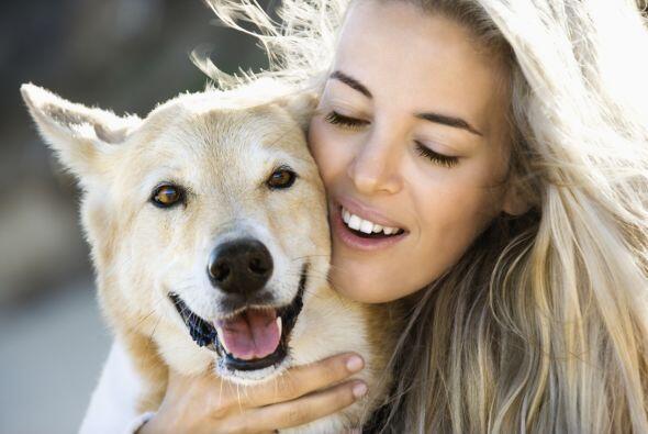 Siguiendo estos consejos tu perro y tu sobrevivirán al calor del verano...