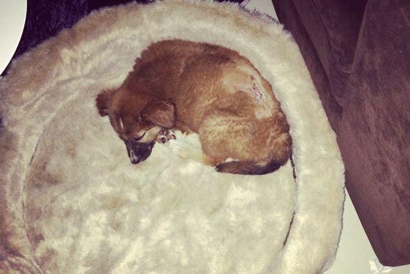 El actor informó en sus cuentas sociales que recogió a la cachorrita que...