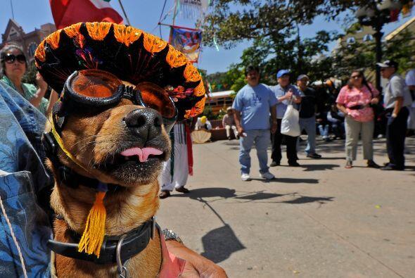 La fiesta en que se celebra a México y su batalla de Puebla, es u...