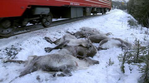 Cientos de millas de las vías férreas de Noruega est&aacut...