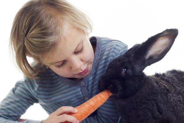 Nutrición. Es uno de los grandes factores en la vida de los animales y e...