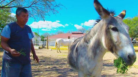 Doña Cuca, la burra detenida en la frontera hace 7 años cu...