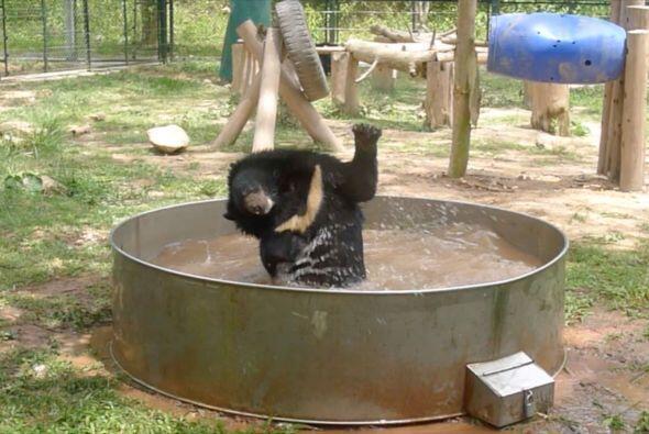 Oso tomó un baño muy divertido