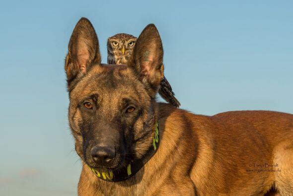 Tanja es fotógrafa de animales.