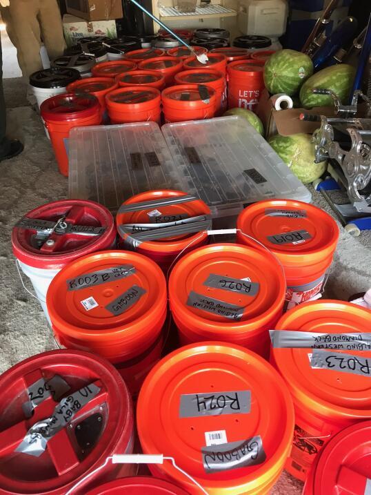 Almacenadas en contenedores en un cuarto común las autoridades detectaro...