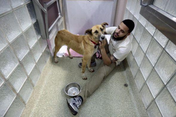 Muchos refugios conocen la procedencia de los animalitos es por esto que...