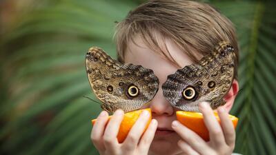 Los insectos: esos millones de desconocidos con los que convivimos