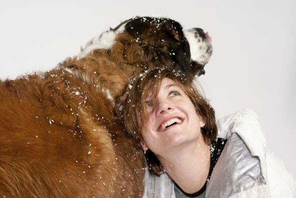 9.San Bernardo Es un típico perro de familia, cariñoso y tranquilo, a p...