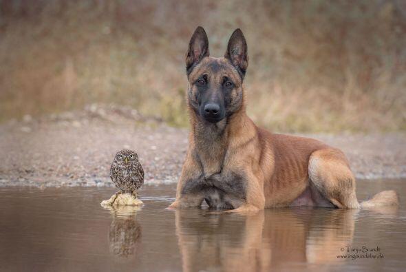 Ingo no suele ser un perro que está quieto todo el tiempo.