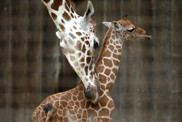 No dudamos que este pequeñín encuentre en el amor de su madre y los cuid...