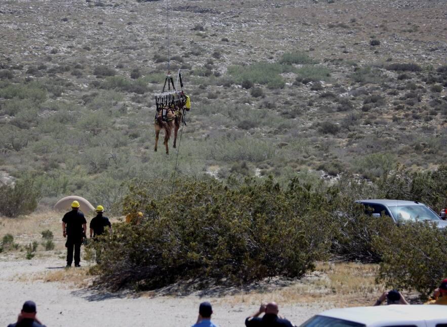 El caballo aterriza en el área prevista para su tratamiento médico