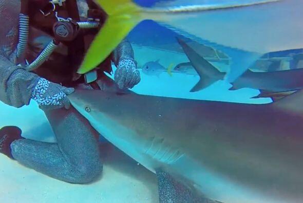 Los tiburones se le acercan y la rodean lentamente sin hacerle ningún da...