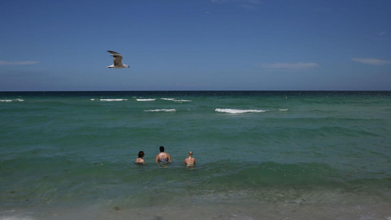 El pasado 11 de julio, un tiburó atacó a un bañista en Sunny Isles, Flor...