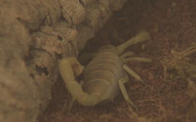 Encuentran tarántulas y escorpiones en un apartamento del suroeste de Ho...